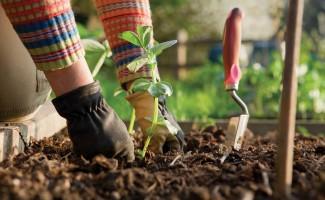 News Spring Gardening
